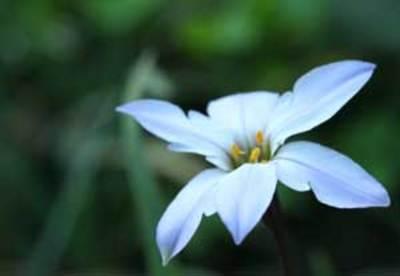 何と言うお花でしょう.jpg