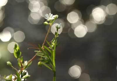 水辺の花.jpg