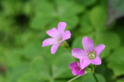 ピンクの可愛い花.jpg