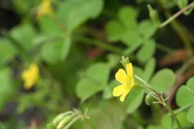 黄色の草花.jpg