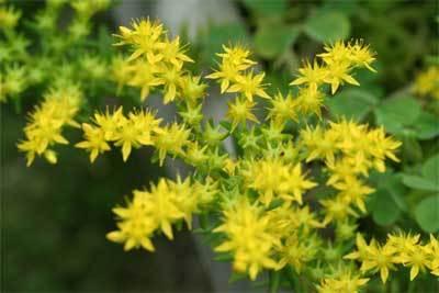 可愛い黄色の花.jpg