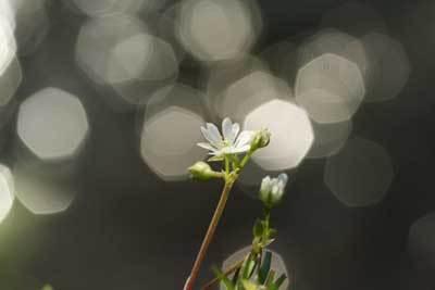 小川に咲く花.jpg