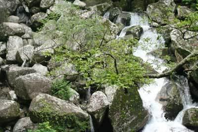 那智の滝3.jpg