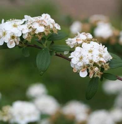 白い花が.jpg