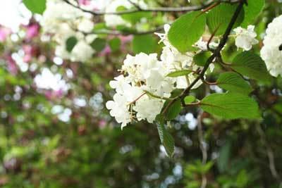 竜神に咲く花.jpg